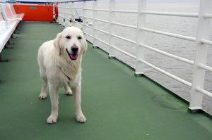 Eerste stappen op veerboot