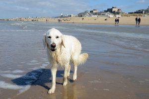 Sluipen op het strand