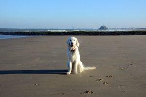 Poseren op het strand