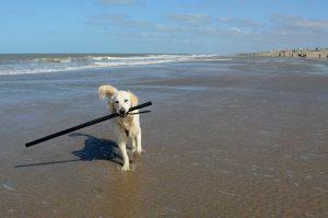 Een strandjutter