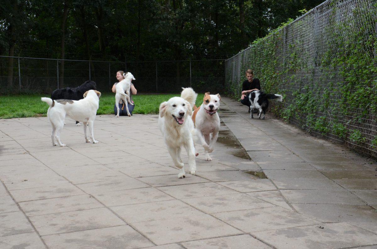 Een dagje vakantie in een hondenpension
