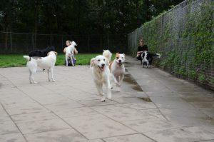 Dierenverzorgers Wilma en Dion met de honden