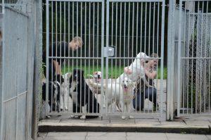 Een hondenpension is een pret- en vakantiepark